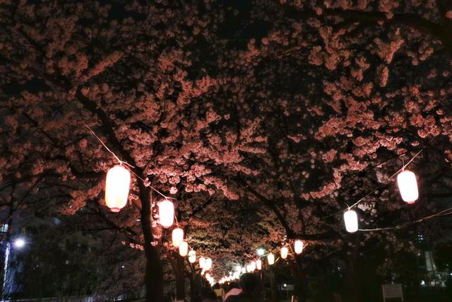 仙台堀川公園桜まつり,jpg (5)