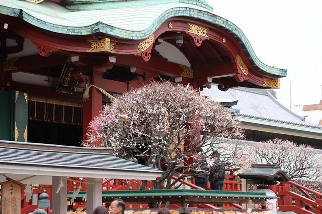 亀戸天神社 (63)