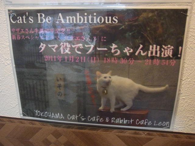 うさぎカフェ (29)