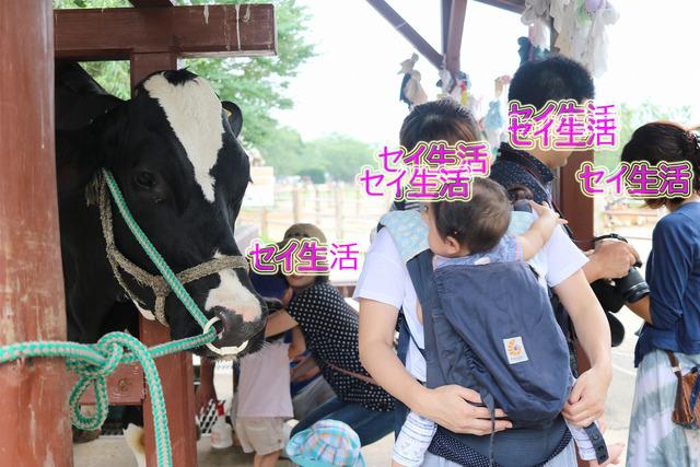成田ゆめ牧場 (4)