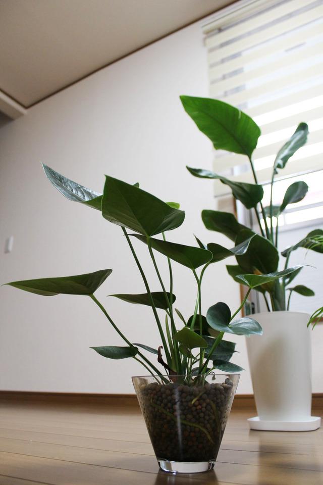 観葉植物 (4)