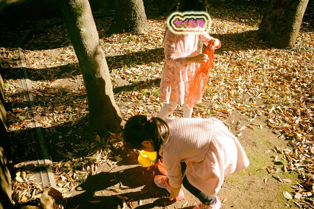 東京の下町の秋を見つけに散歩 (13)