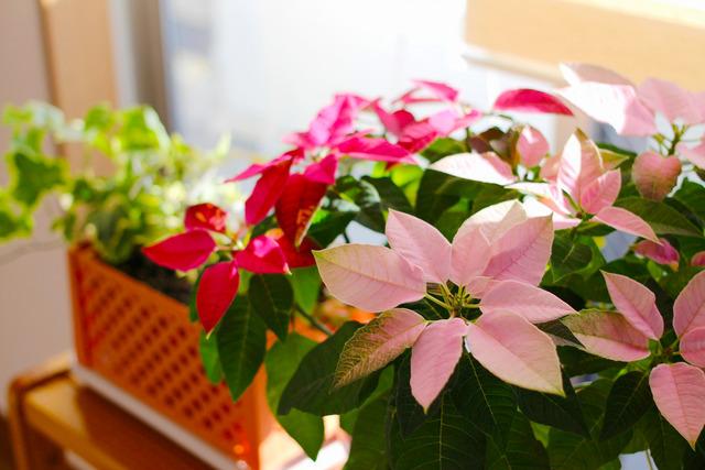 観葉植物 (1)