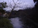 鶴岡八幡宮池