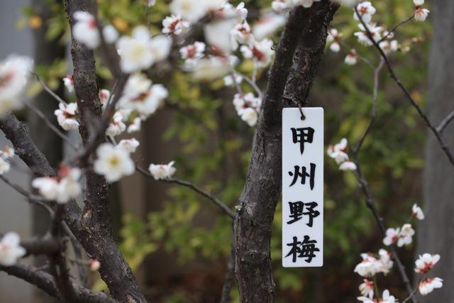 亀戸天神社 (57)