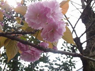 春 (17)