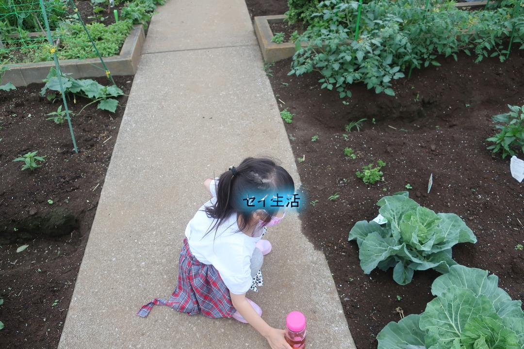 姪っ子と小さな農園 (1)
