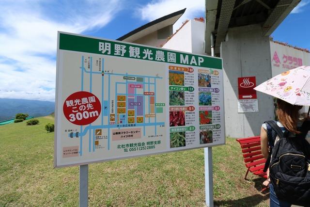 明野ひまわり畑 (2)