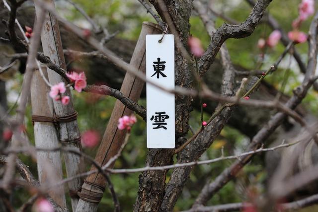 亀戸天神社 (18)