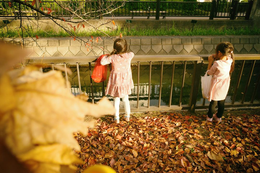 東京の下町の秋を見つけに散歩 (22)