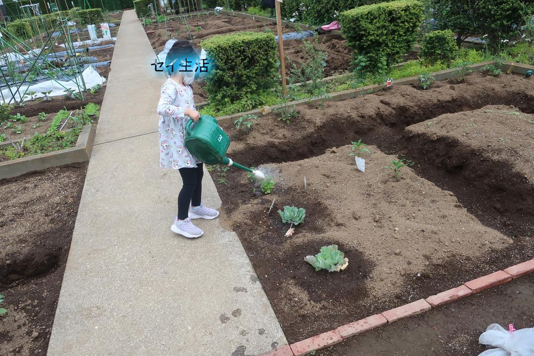 小さな農園 (1)