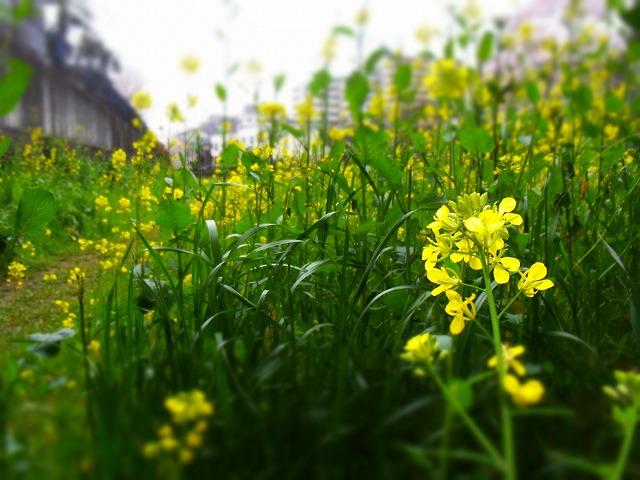 春 (6)