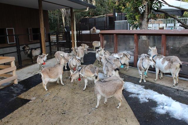 上野動物園 (21)