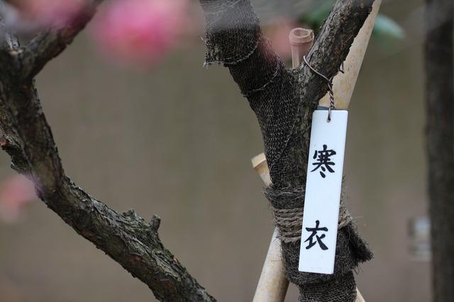 亀戸天神社 (55)