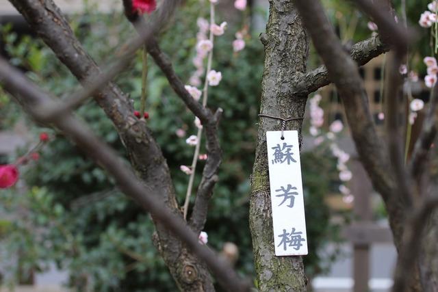 亀戸天神社 (26)