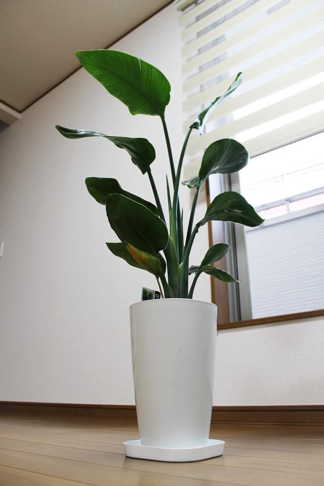 観葉植物 (2)
