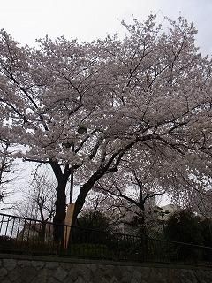 春 (2)