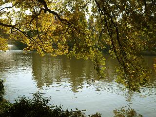 池と鳥002