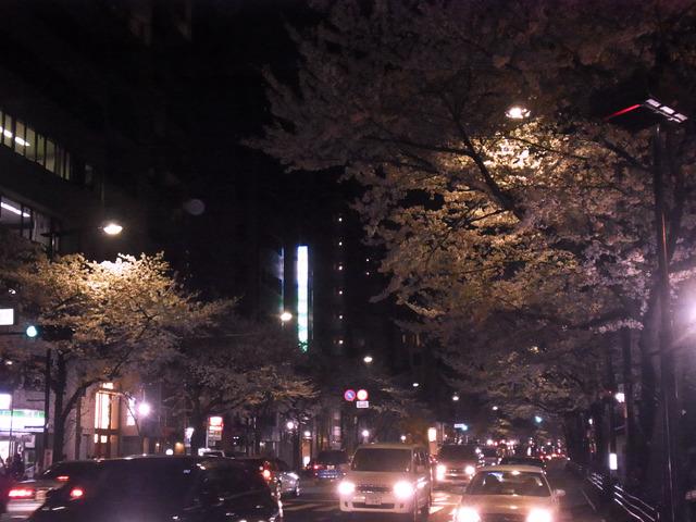 2012桜 (9)
