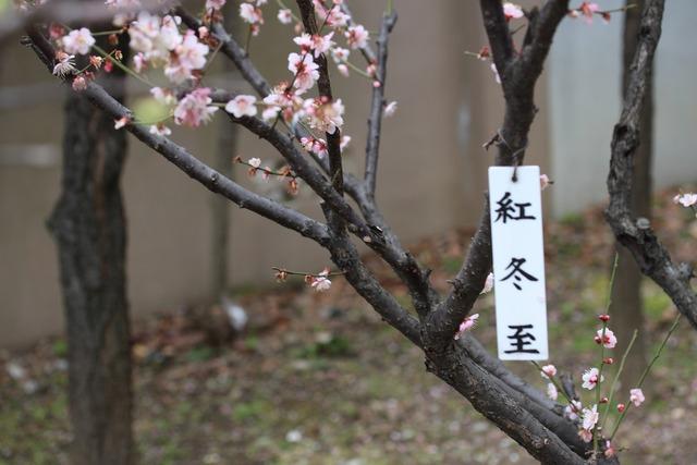 亀戸天神社 (53)