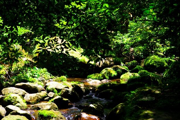 西表島 ピナイサーラの滝