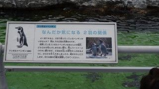 oregairu2-13-1 (31)