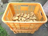 ジャガイモ収穫完了♪