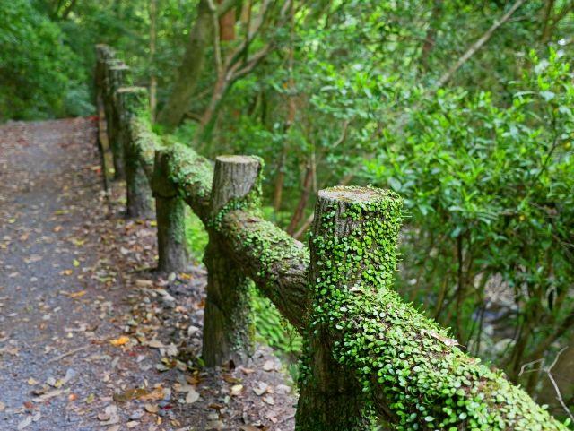 林間学習(森の中)
