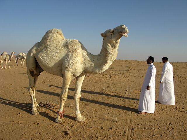 saudi-arabia-95500_640