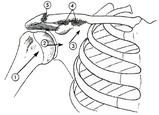 介達外力による肩鎖関節捻挫