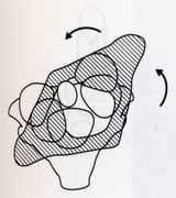 頸回旋時、外側環軸関節では亜脱臼状態になる。