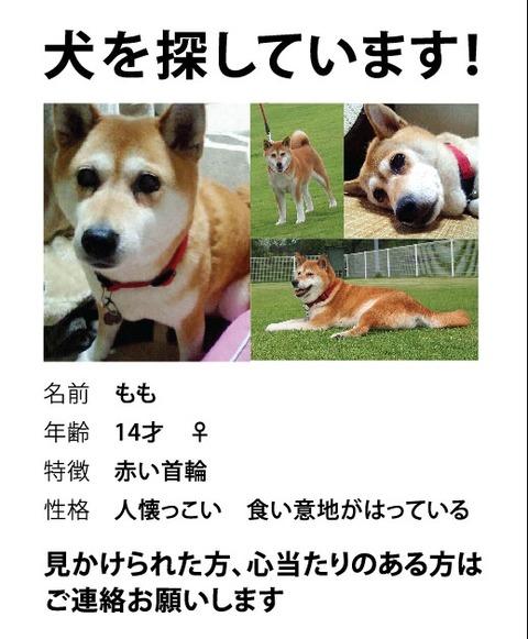 momosagashi2
