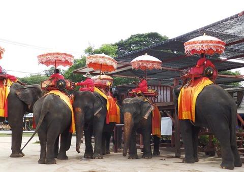 タイの象2