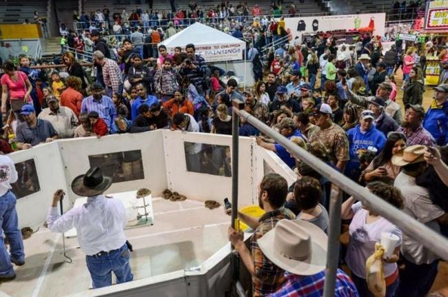 テキサスのガラガラ蛇フェスティバル