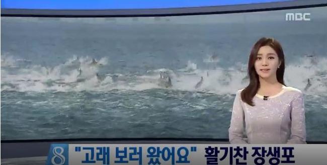 韓国近海のイルカの群れ