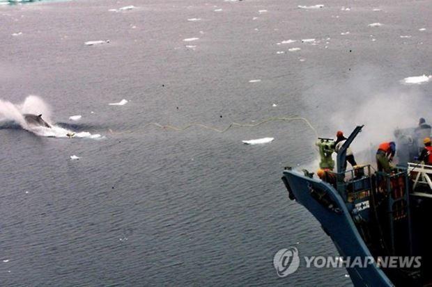 ノルウェーの捕鯨