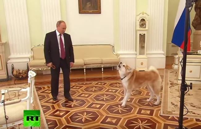 プーチン大統領の秋田犬