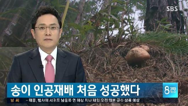 韓国で松茸の人工栽培に成功