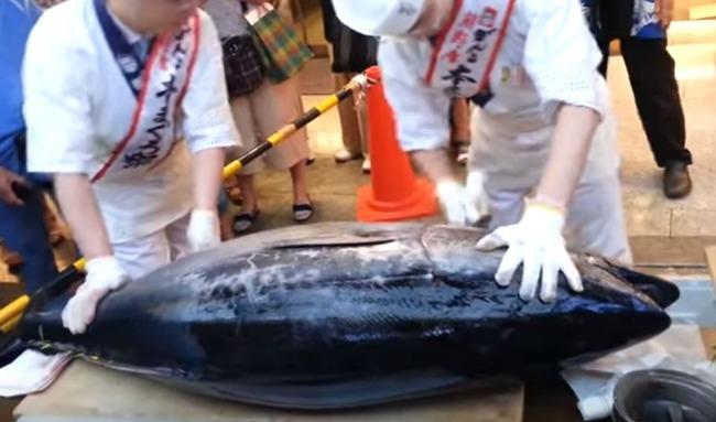 海外「日本人はマグロを捌く時に韓国人の様に軍手を付けるのか?」大阪難波で行われたマグロの解体ショーの様子をご覧ください 海外の反応