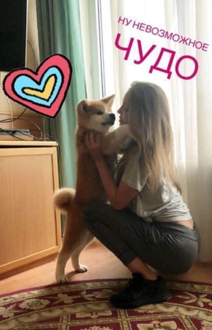 ロシア人「秋田犬のマサルを金髪美女が大絶賛!マサルも喜びの余り金髪美女の顔をペロペロ!」 海外の反応