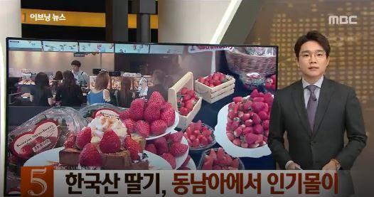 【韓国経済】タイ人「韓国はイチゴの国!韓国のイチゴは最高に美味しい」韓国人「韓国産イチゴが、東南アジアで人気」 韓国経済ニュース