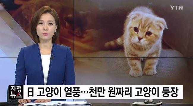 日本で猫ブーム