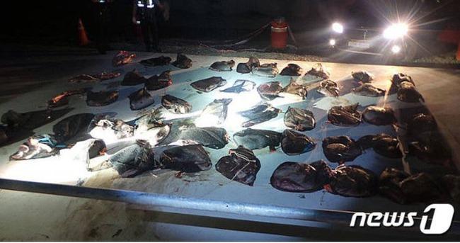 韓国人「和食レストランで食べたクジラが臭くて不味かった」韓国で800万円相当のクジラ肉を不法所持していた運び屋を逮捕! 韓国の反応