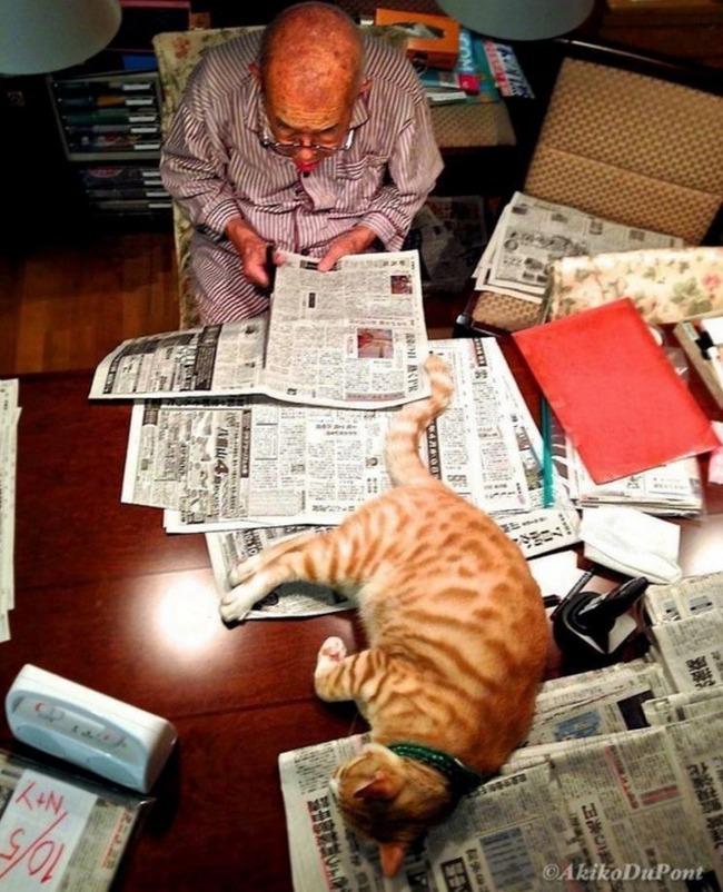 癒してくれる赤猫
