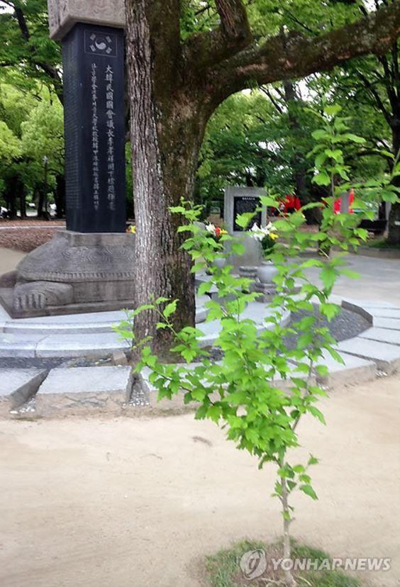 ムクゲの木