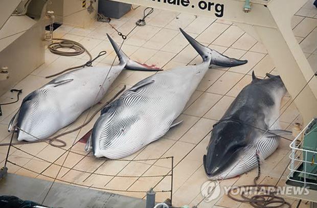 日本の捕鯨船