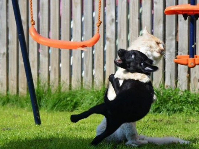 犬と遊ぶ猫