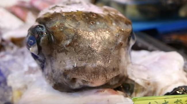 海外「ハリセンボンって食べ物?」日本で撮影されたハリセンボンの刺身を作る動画をご覧ください 海外の反応
