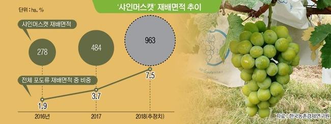 韓国人「また日本が完全敗北!」韓国が日本品種である「シャインマスカット」の大量栽培方式を開発し海外に大量輸出!日本は一銭もロイヤリティを取れず 韓国の反応