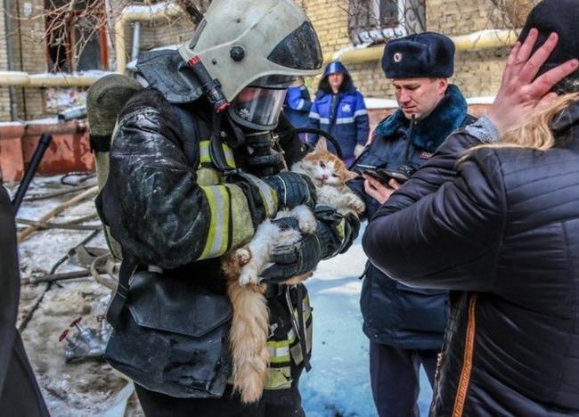 火災現場から救出された猫